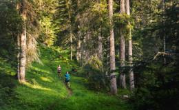 Ab in den Wald
